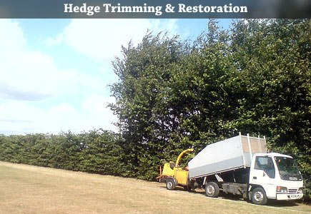 Hedge Trimming and Restoration