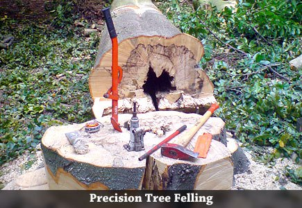 Precision Tree Felling in Norfolk & Suffolk