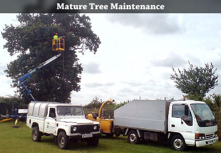 Mature Tree Maintenance